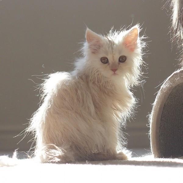 تحميم القطط و أفكار لتسهيل المهمة