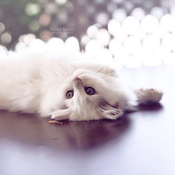 كيف أعتني بنظافة وصحة قطتي؟