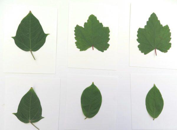 ٥ أنشطة للأطفال باستخدام أوراق الشجر مدونة أروى